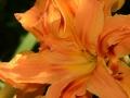 formal-gardens-12-lores