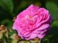 formal-gardens-5a-lores