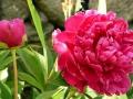 formal-gardens-8-lores