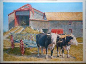 oxen Canterbury
