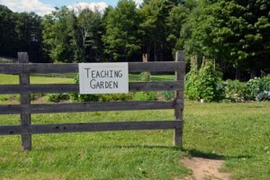 teachinggarden_for web.jpg