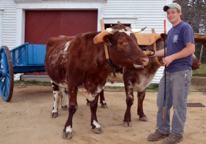 Tyler Allen with team of oxen & wagon - Photo by Lynn Martin Graton