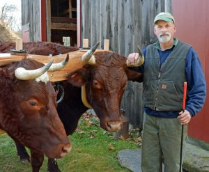 Tim Huppe with Oxen - Photo by Lynn Martin Graton