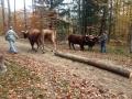 Oxen Workshop