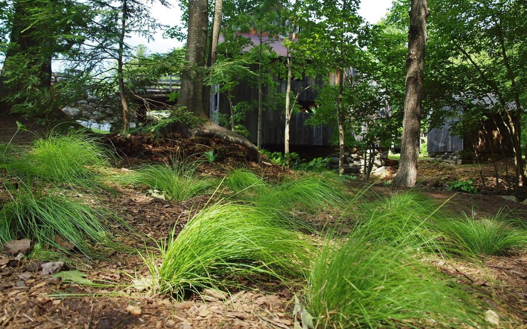 Stream Garden is a Heatwave Reprieve