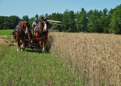 A Beautiful Day for a Rye Harvest